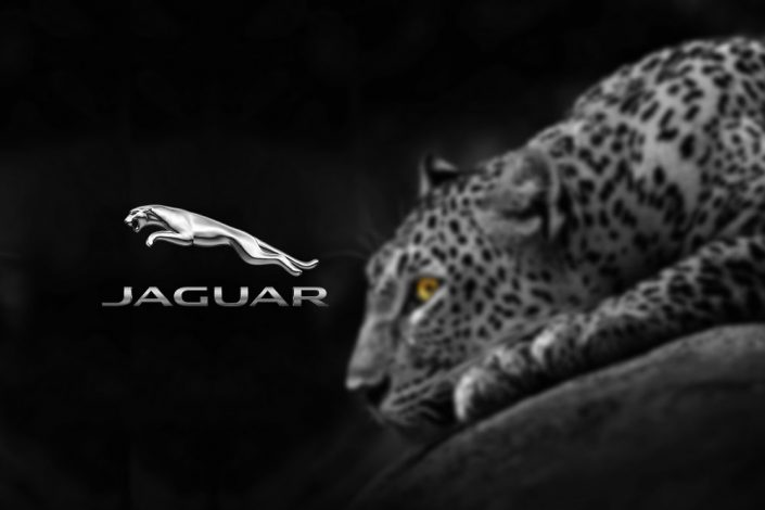 طراحی لوگو با نماد حیوانات، روشی برای متفاوت کردن برند